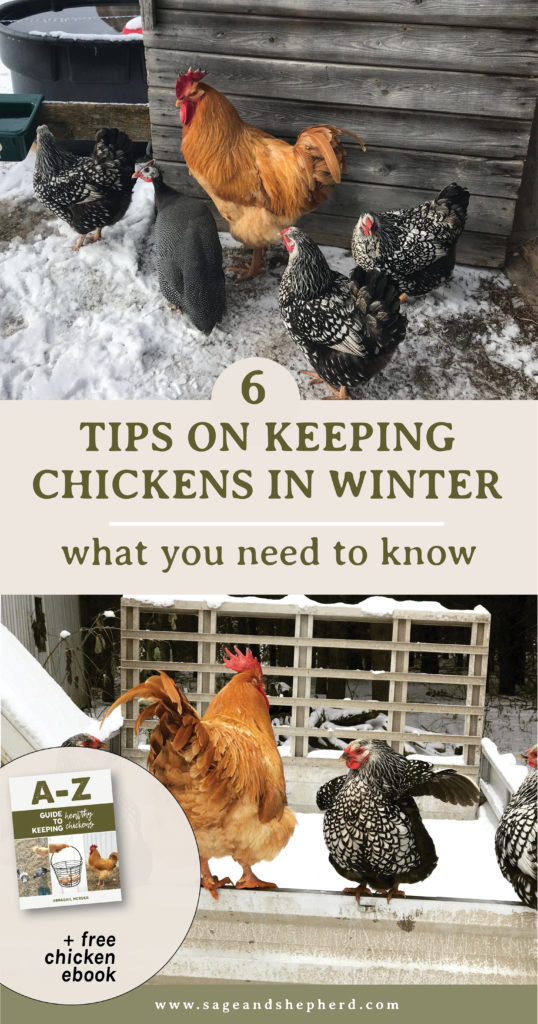 6 tips for keeping chickens in the winter
