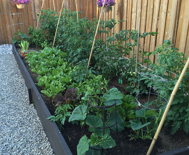 what i learned about the square foot garden method
