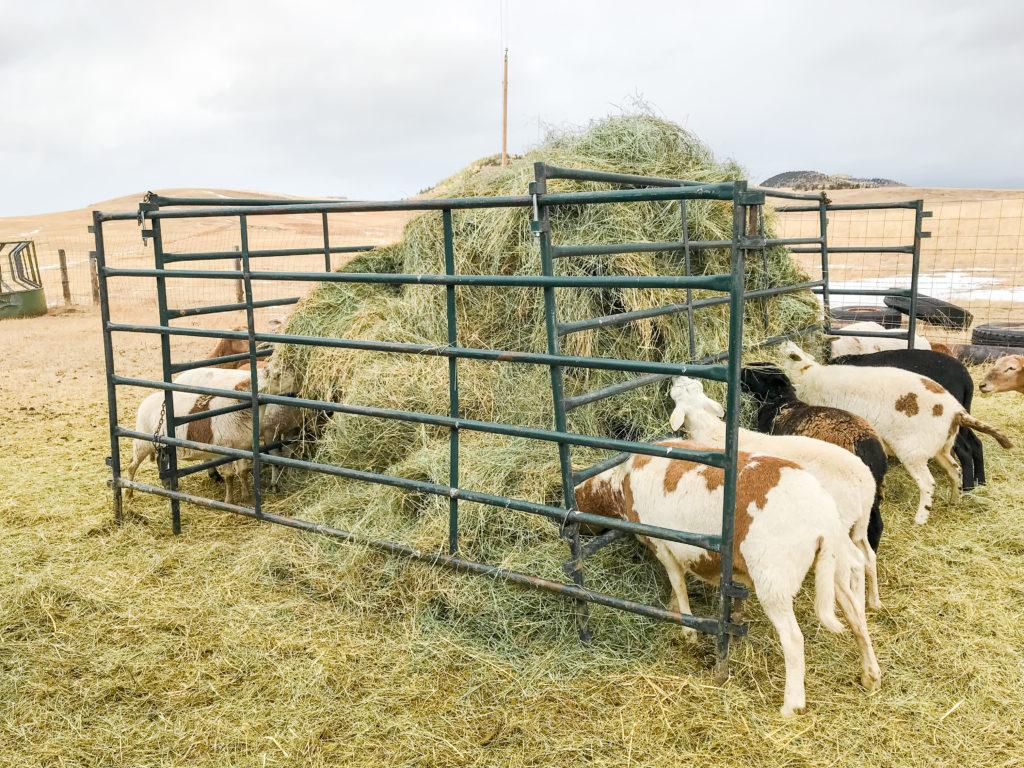 diy self feeding hay feeder