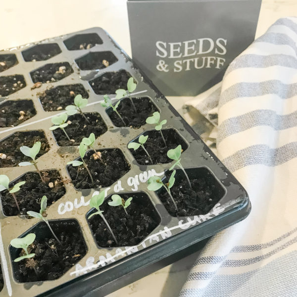 The Beginners Guide to Starting Seeds Indoors