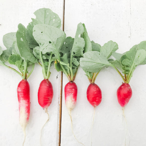 8 Easiest Vegetables To Grow For Beginners