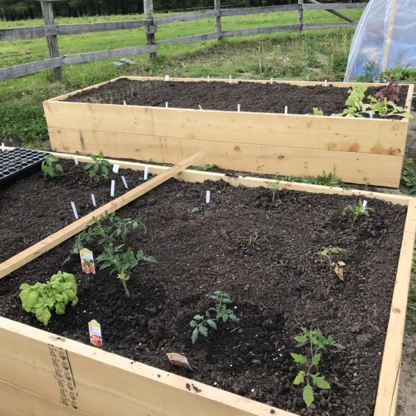 7 Things to Consider When Planning Your Vegetable Garden
