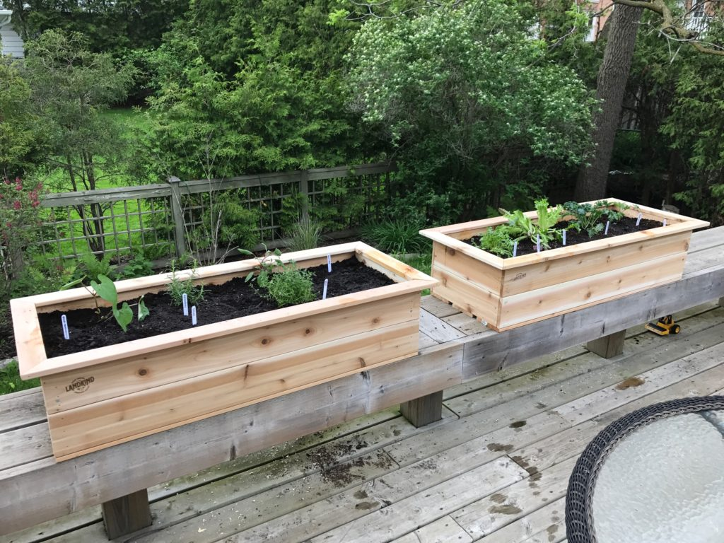 growing more food in less space