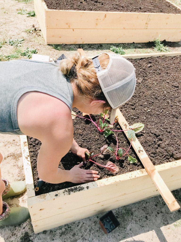 when to plant a vegetable garden
