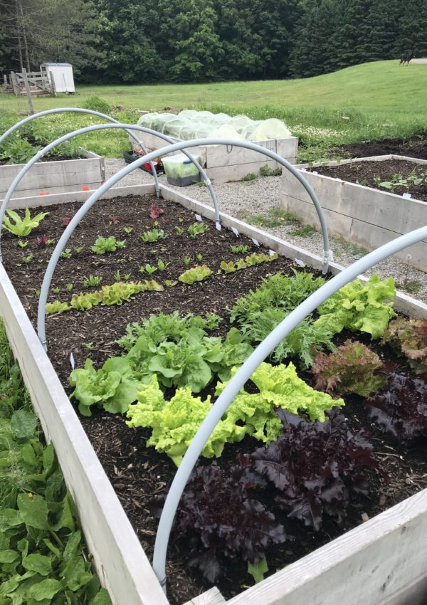 6 Secrets to Growing More Food in Less Space