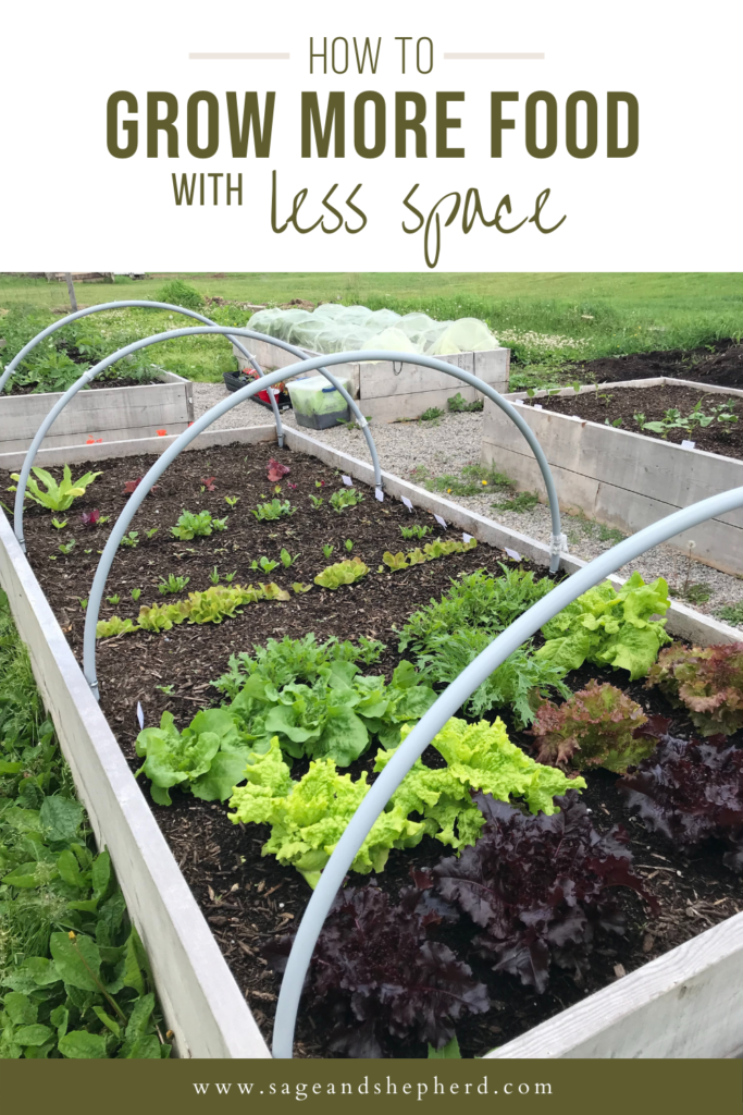 5 secrets for growing more food in less space