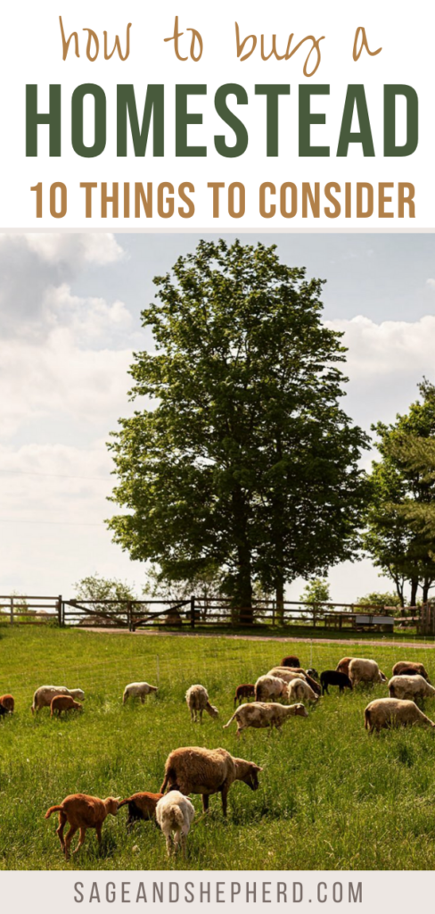 what to look for when buying a homestead